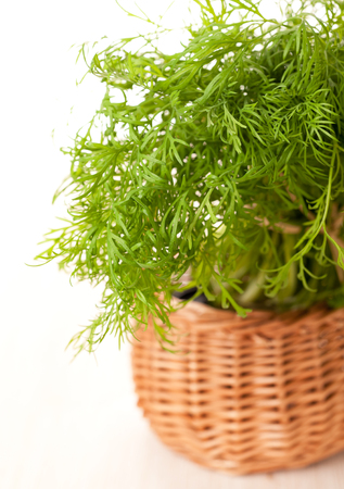 Fresh dill in a basket Stock Photo