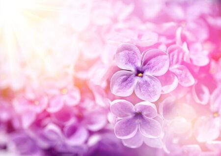 Lilac flowers Zdjęcie Seryjne