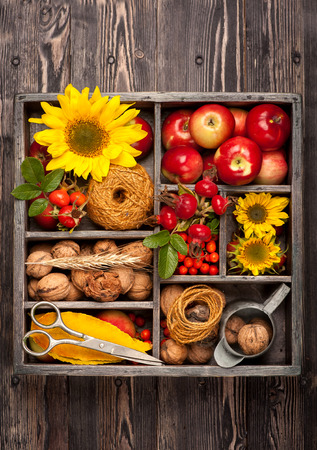 Autumn composition with flowers sunflowers, red apples, nuts in vintage wooden box. Collage autumn. photo