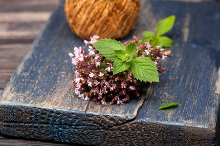 origanum: Marjoram Origanum vulgare and Mint Stock Photo