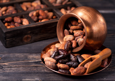 cocoa beans Standard-Bild