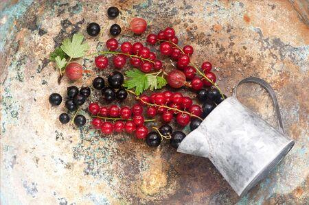 black currants: Summer berries on  metal background. Red currants, black currants and gooseberries Stock Photo