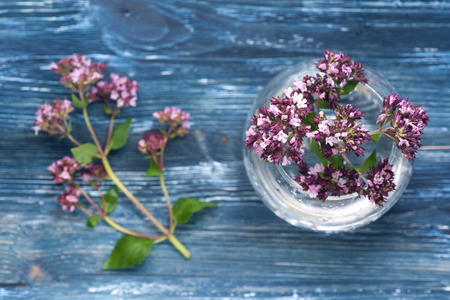 vulgare: Herbs  Origanum vulgare Stock Photo
