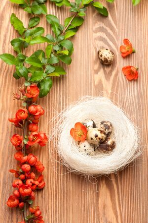 quail nest: Quail eggs in the nest  and flowers. Romantic Easter background
