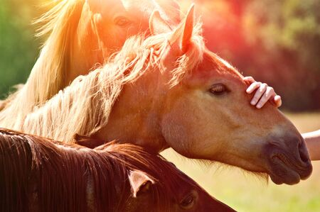 Horses on a sunny day and hand