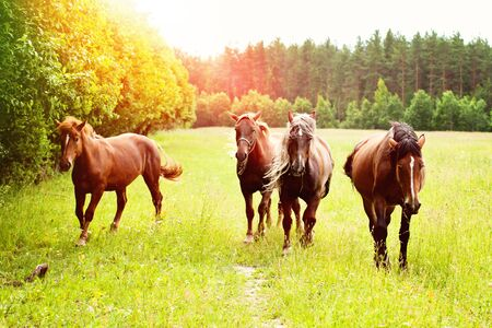 Horses in a meadow on a sunny day