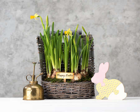 Happy easter card with Easter bunny and beautiful spring flowers in the basket. Easter festive concept Stockfoto