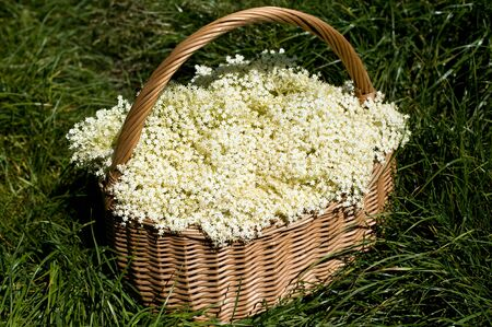 fertility emblem: Elderberry flowers in the basket