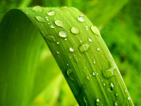Gentile leaf. Element of design. photo