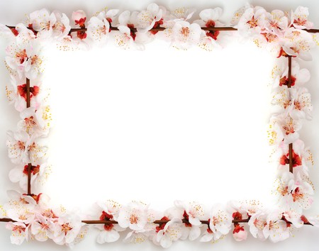 tenderly: Telaio da sakura. Elemento di design.  Archivio Fotografico