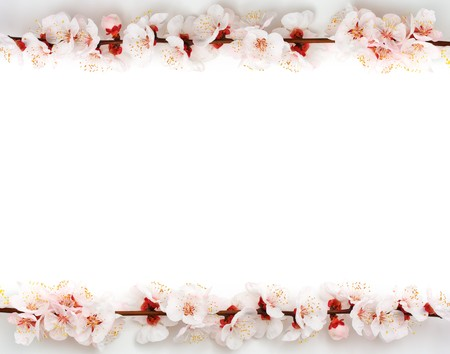 Isolated frame from sakura. Element of design. photo