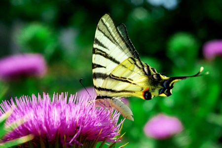Butterfly and flower. Nature composition. photo