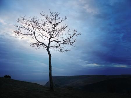 silhouette of tree Stock Photo - 7579546