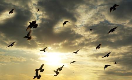 Birds in sky. Element of design. photo