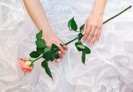 Rose in bride hands. Conceptual design. Stock Photo - 7608097