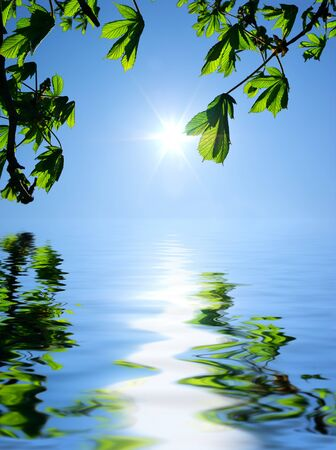 Sun, leafs and water reflection. Element of design. Stock Photo - 7608111
