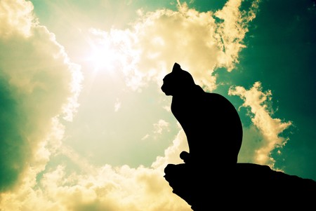 gato negro: Gato y cielo profundo. Elemento de dise�o.  Foto de archivo