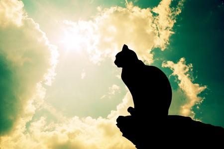 silhouette gatto: Gatto e profondo cielo. Elemento di design.
