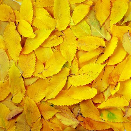 Autumn texture. Element of design. photo