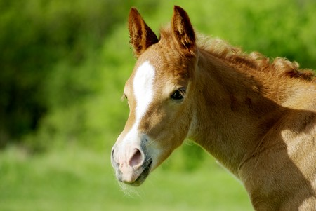 Foal portrait. Element of design.