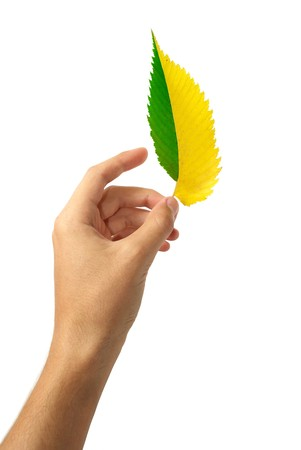 Leaf in hand. Element of design. Stock Photo - 7725160