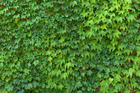 Leaf texture. Element of design. photo