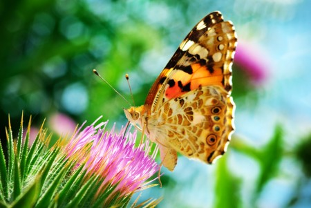 Butterfly on flower. Nature composition. photo