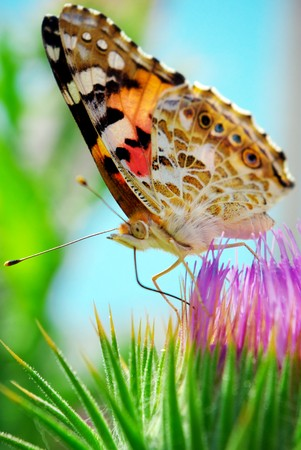 Colorful moth and flower. Season specific. photo