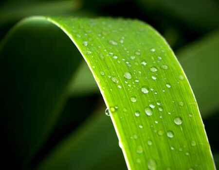 Leaf in dark. Element of nature composition. photo