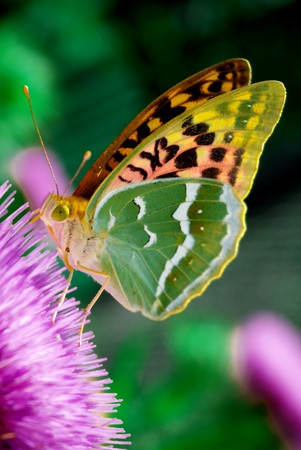 Beauty butterfly on flower. Nature composition.  photo