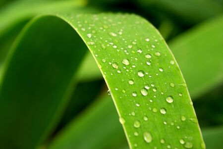 Gentile leaf and drops. Nature composition. photo