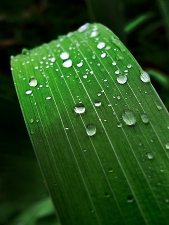Water drops on green leaf. photo