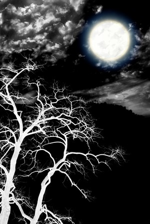 eerie: Tree and deep dark night. Nature composition. Stock Photo