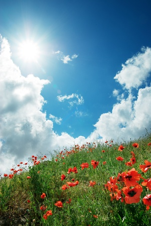 Hill of poppies and deep sky. Composition of nature. photo