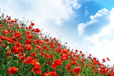 Poppies hill and sunny sky. Composition of spring nature. photo