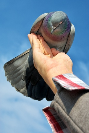 Feeding the dove from hand. Element of desig. photo