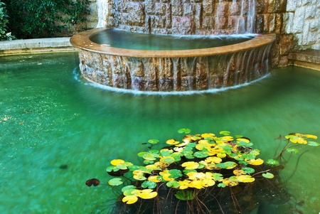 garden pond: Water and leafs from water lily. Nature design.