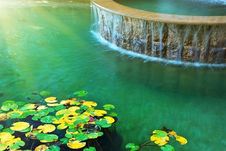Water and leafs from water lily. Nature design. photo