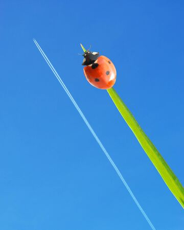 Ladybug and airplane on sky background. Conceptual design. photo