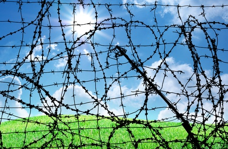 Barbed wire and freedom. Conseptual design. Stock Photo - 9414273