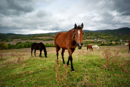 Horse in meadow. Nature composition. photo