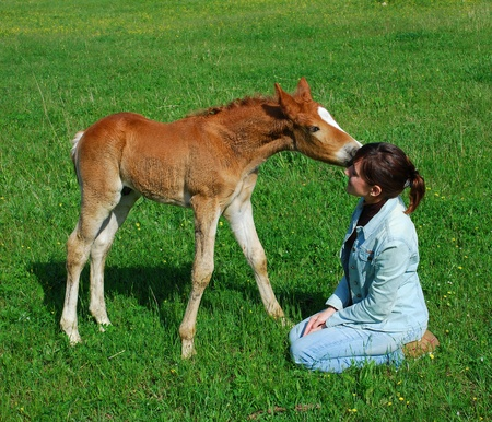 Horse and girl on green meadow. photo