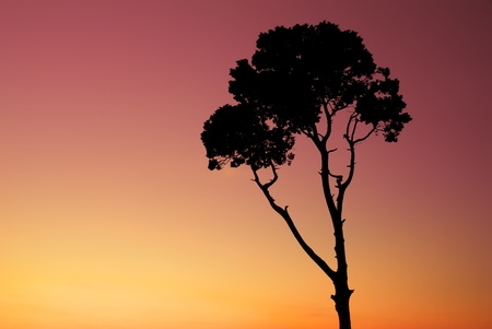 Silhouette of tree at the sunset photo