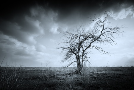 Lonely dead tree. Art nature. Stock Photo - 9512639