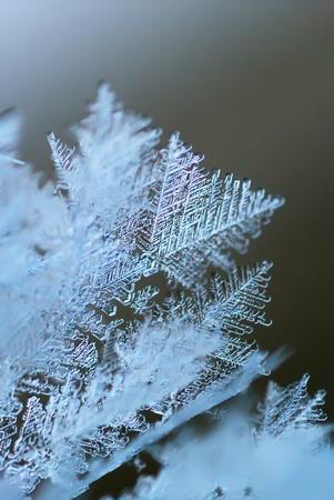 crystallization: Rime macro. Natural pattern of nature.