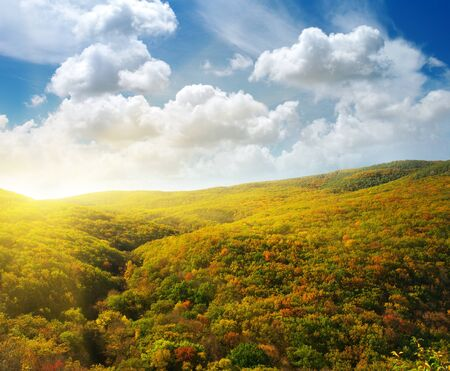 Forest hills. Composition of nature. Stock Photo - 9913730