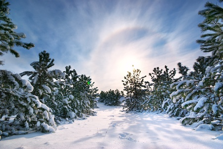 sunny cold days: Winter landscape. Composition of nature. Stock Photo