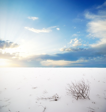 Winter plain. Composition of nature. photo