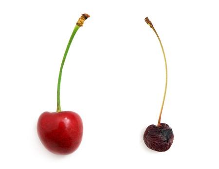 putrid: Rotten and fresh sweet cherries. Element of design.