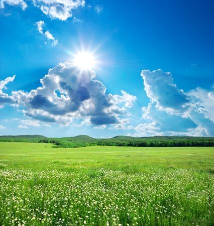 dia soleado: Prado verde en montaña. Composición de la naturaleza.  Foto de archivo
